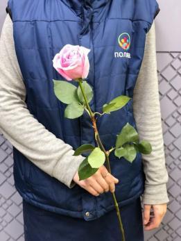 Роза Микс 60см до 25 шт Эквадор