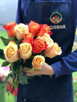 Роза Оранжевая 109 шт Эквадор