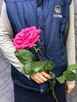 Роза Микс 70см до 25шт Эквадор