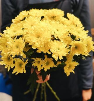 Хризантема Кустовая Жёлтая до 5 шт