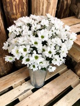 Хризантема Кустовая Белая до 5 шт