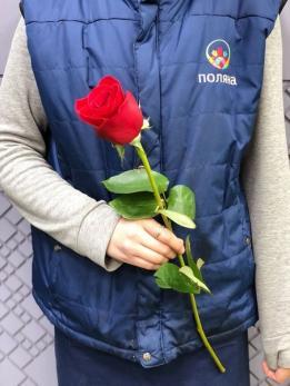 Роза Красная 60см до 25 шт Эквадор
