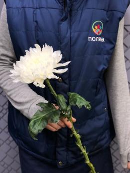 Хризантема Одноголовая Антонов до 10 шт