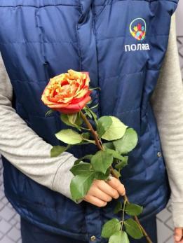 Роза WOW до 10 шт Эквадор