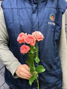 Роза Кустовая до 10 шт