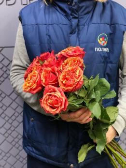 Роза WOW от 10 шт Эквадор