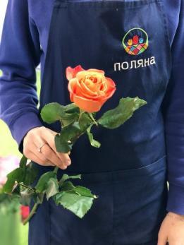 Роза Оранжевая до 25 шт Эквадор